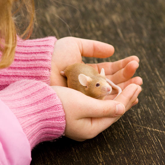 how to play with your pet mouse