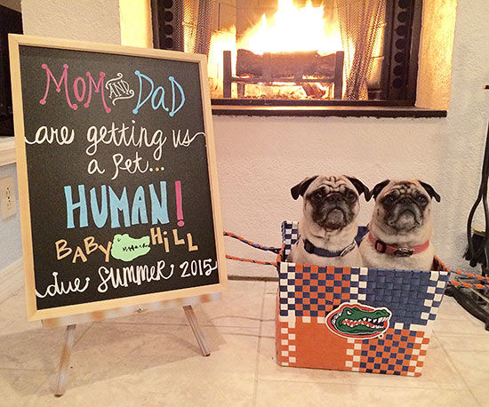 Our Favorite Pregnancy Announcements With Pets