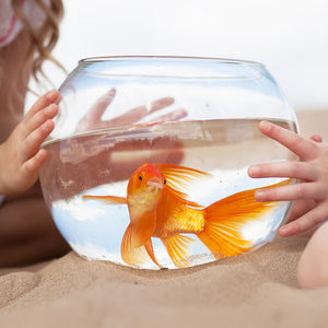 Kids Playing with Goldfish