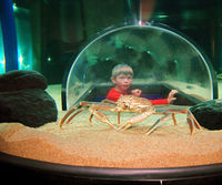 boy viewing crab
