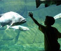 boy viewing sea animals