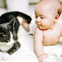 baby lying next to cat