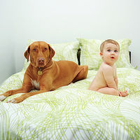 baby on bed with dog