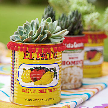 Cacti and succulents in cans