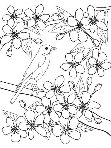 Printable spring coloring pages for Cherry blossom coloring pages
