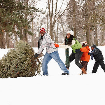 family picking out Christmas tree