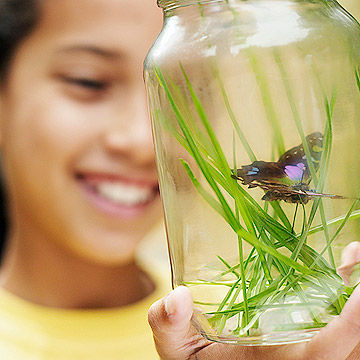 child with butterfly in jar
