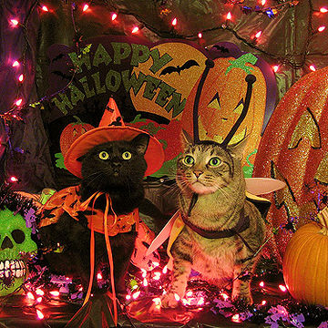 haunted house cats