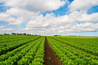 Listeria Concern Lead Dole to Recall Bagged Lettuce 29735
