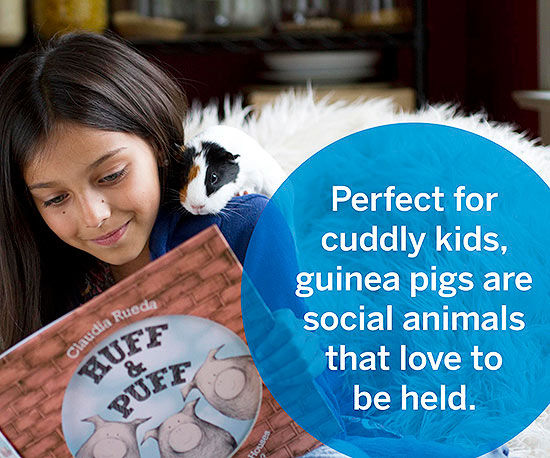 The Skinny On Guinea Pigs and Hamsters