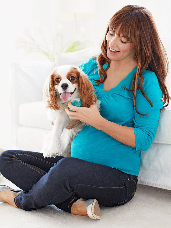 prep your pooch  introducing dog and baby