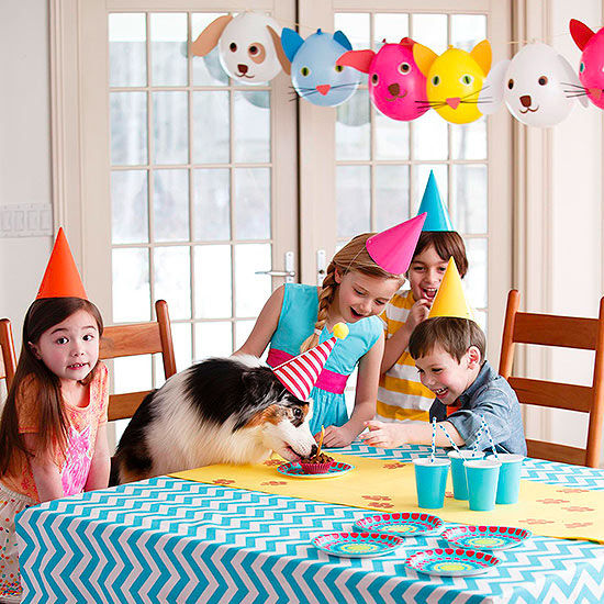 Throw A Party For Your Pet