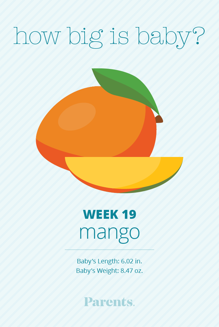 Image result for 19 weeks today parenting size of a mango