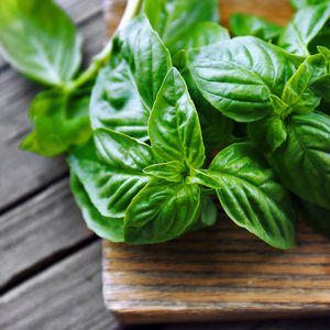basil for bug bites