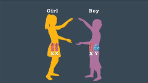 Boy or Girl: How Genetics Determine Your Baby's Gender