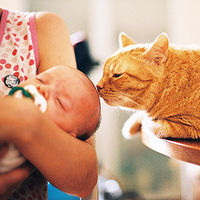 Pet cat and newborn baby