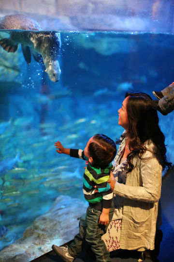 Family Memberships to Attractions Aquarium