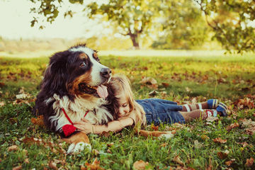 child with bernese mountain dog