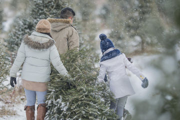 Family carrying Christmas tree from tree farm