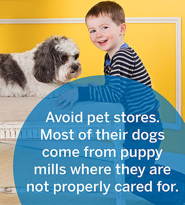 Find Your Furry Friend