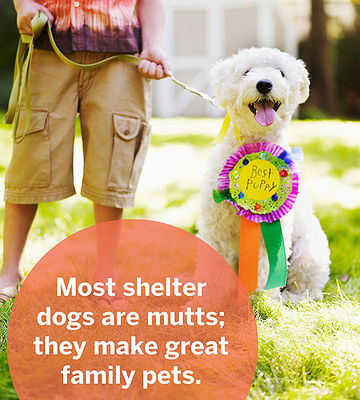 The Case For Shelters