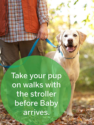 Prepare Your Dog For Baby