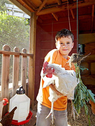 Child holding chicken