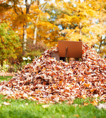 Kid peeking out of leaf pile