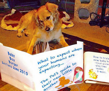 Our Favorite Pregnancy Announcements With Pets!