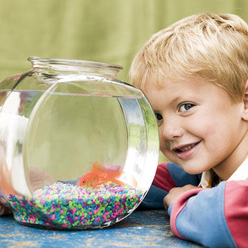 The Best Pet For Your Child
