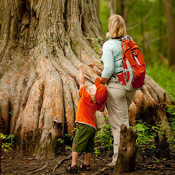 mother and child looking up at a tree
