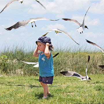 Child playing with birds