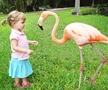 Toddler with a Flamingo