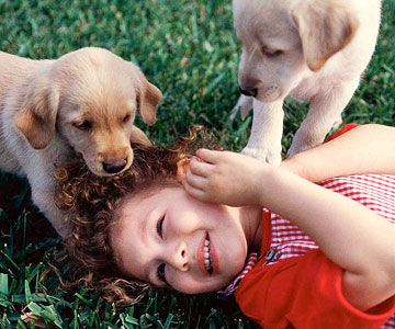 girl in grass playing with puppies