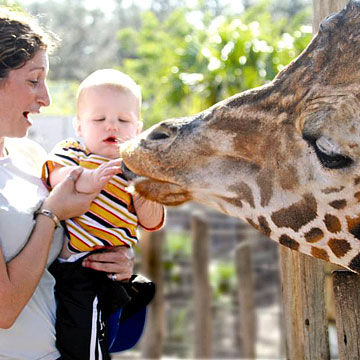 Best Zoos in The U.S.