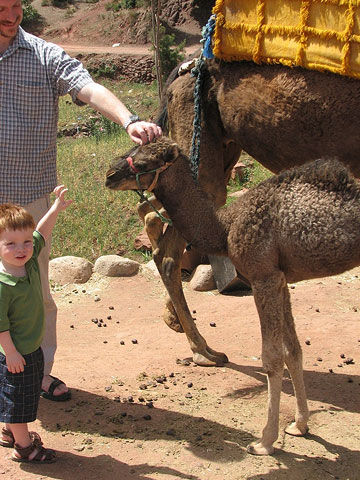 Zach and Camel