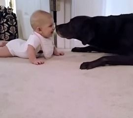 This Video of a Dog Kissing a Baby Will Make Your Day 25507