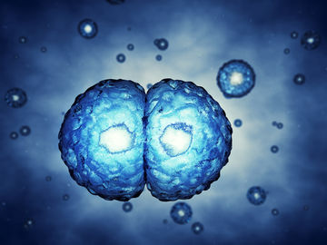 Study: Twin Embryos May Help Each Other Survive in IVF 29422
