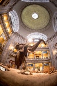 Main rotunda of the Smithsonian Museum of Natural History