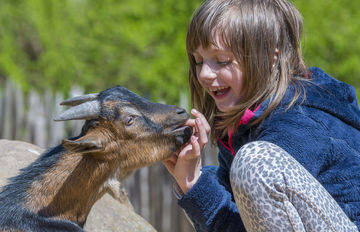 little girl with goat