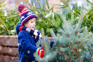 Tree Safety Kid Chooses Real Christmas Tree
